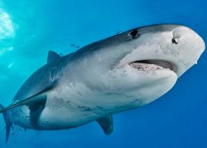 Чем отличается акулий жир от рыбьего