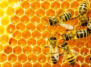 Как правильно использовать натуральный мёд